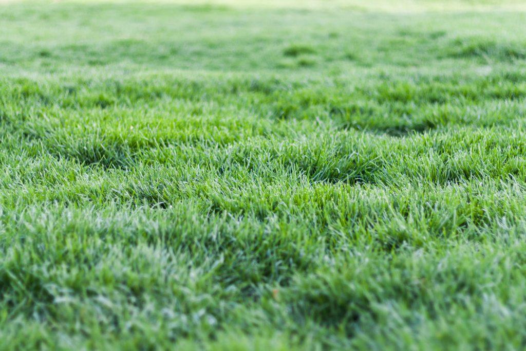 איך מנקים דשא סינטטי