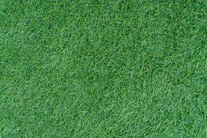 דשא טבעי