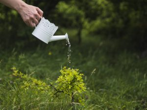 שיטה להשקיית דשא