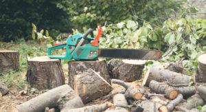 אישור כריתת עץ