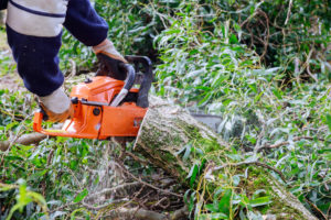 גזימת עצים