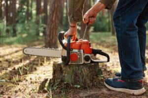 גיזום עצים בעומר