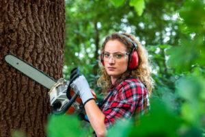כריתת עצים מחיר