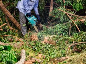 רשימת עצים שאסור לכרות